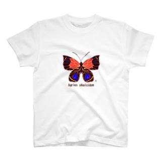 ファルキドンミイロタテハ T-shirts