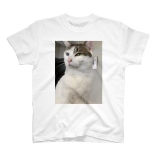 白猫オッドアイしろちゃ2 T-shirts