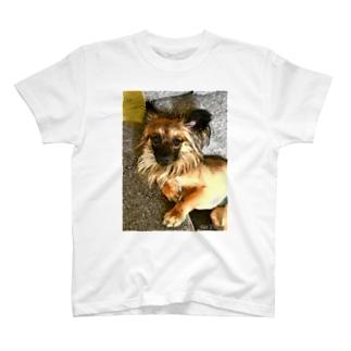 ルルといっしょ T-shirts