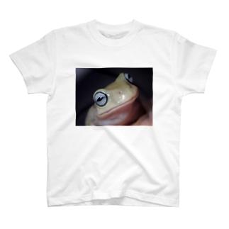 イエアメガエル ブルーアイ T-shirts