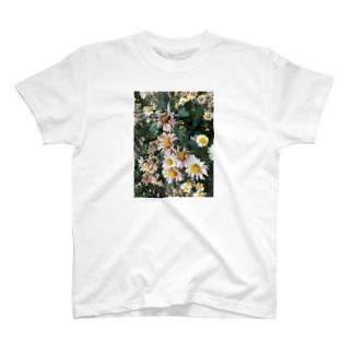 ハナ・ハナ T-shirts