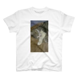 tomomi-covaのスヤスヤネコネコ T-shirts