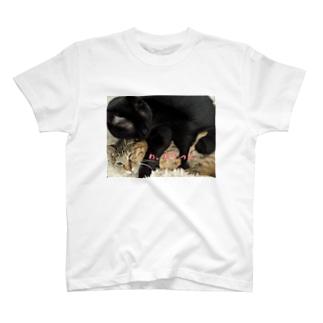 わ、わかった T-shirts