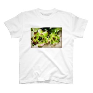 Parfume-weaverの多肉植物シリーズ T-shirts
