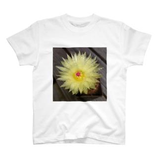 サボテンの花 T-shirts