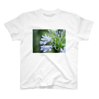 Angel of Agapanthus 170702 T-Shirt