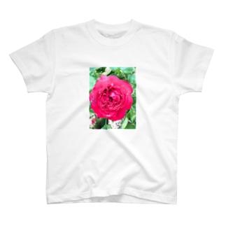 雨の日の薔薇 T-shirts