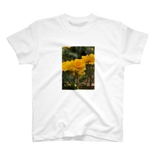 雨の日の薔薇(yellow) T-shirts