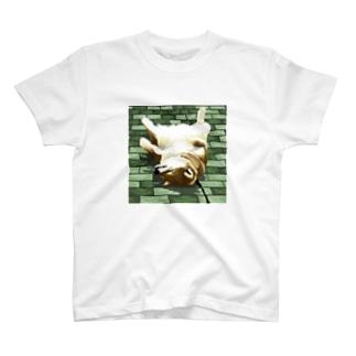 拒否犬 T-shirts