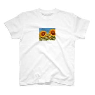Sunflower T-shirts