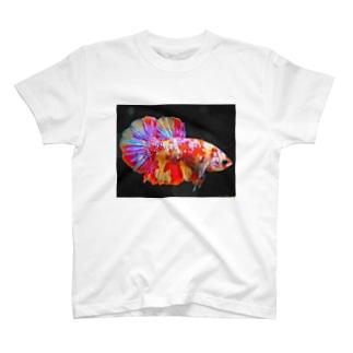 ベタキャンディ T-shirts