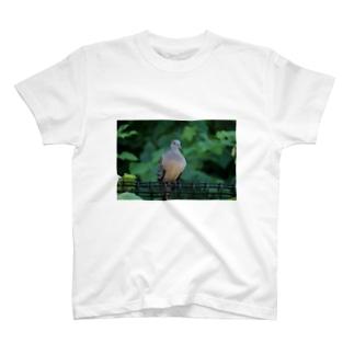 鳩ぽっぽクゥルックゥ T-shirts