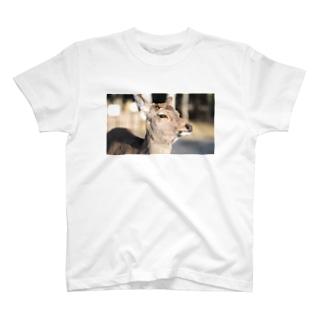 奈良公園のシカ T-shirts