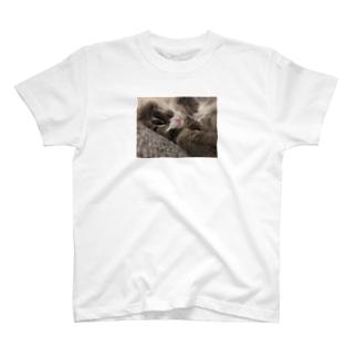 ノルウェージャン フォレストキャット ハルちゃん 猫 T-shirts