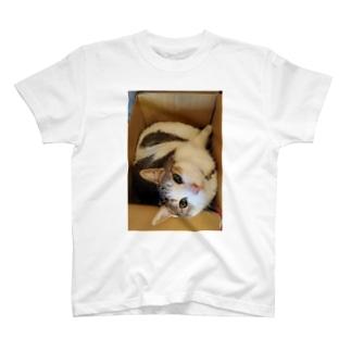 箱入り娘(にゃんこ) T-shirts