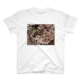 桜 サクラ cherry blossom DATA_P_152 春 spring T-shirts