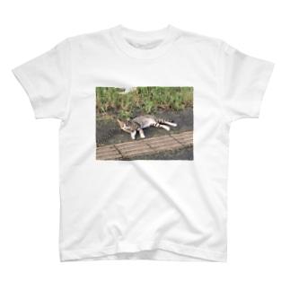 野良猫 feat. 荒川の河川敷 in 赤羽 T-shirts