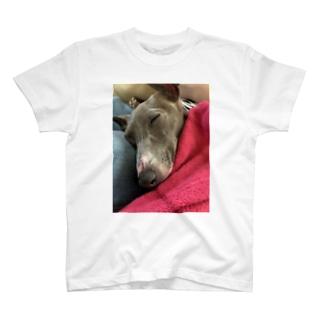 こはちゃんグッズ T-shirts