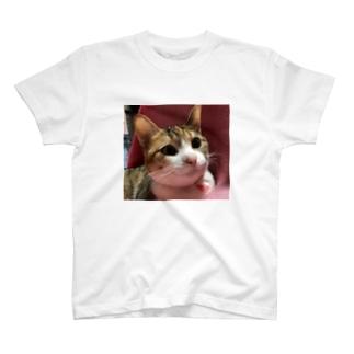 三毛猫のひめ 8 T-shirts