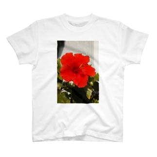 Hibisus T-shirts