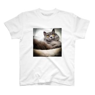 むふん顔の LUKE T-Shirt