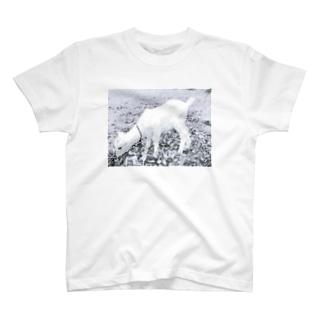 草を食む T-shirts