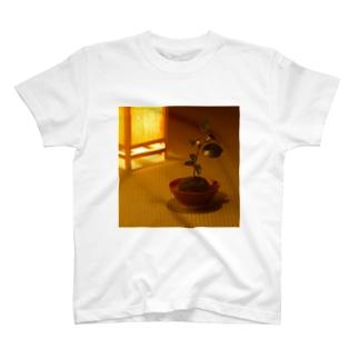 苔玉 T-shirts