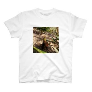 タケノコにょきにょき T-shirts