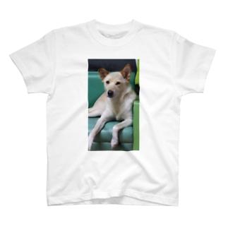 お前ちょっと態度がでかくないか T-shirts