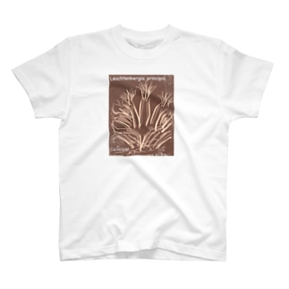 Leuchtenbergia principis(晃山)【86】 T-shirts