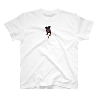 ない T-shirts