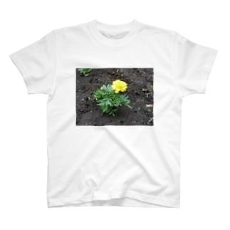 初夏の花壇 T-shirts