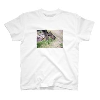 とらちゃん T-shirts
