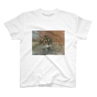 キラキラハム T-shirts