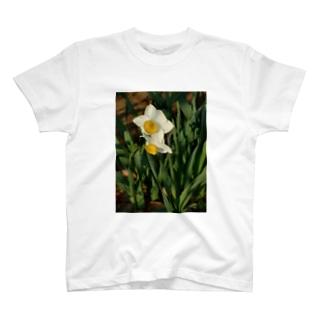 水仙 narcissus DATA_P_156 春 spring T-shirts