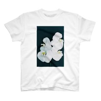 harucameraのharucamera  コチョウラン-6 T-shirts