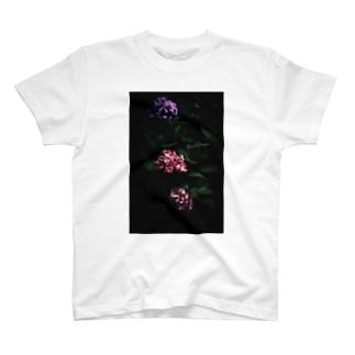 【花途夢】紫陽花 ph data./2020.7.6 T-shirts