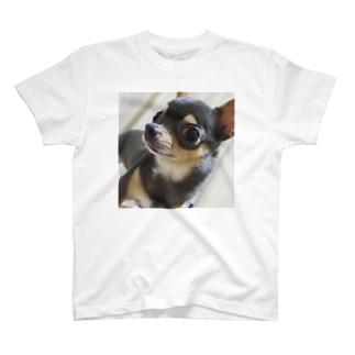 ぱちくりおめめのスムチー T-shirts