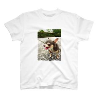 Happy         Chihuahua T-shirts