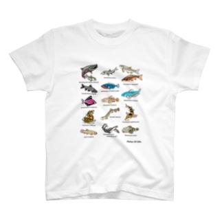 岐阜県の魚類 T-shirts