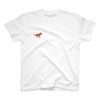 フライングドッグ T-shirts