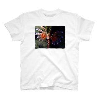 ミノカサゴ(ナイトダイビング) T-shirts