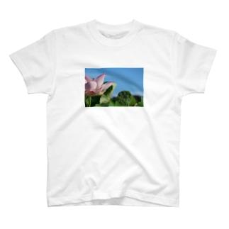 午前7時の蓮 T-shirts