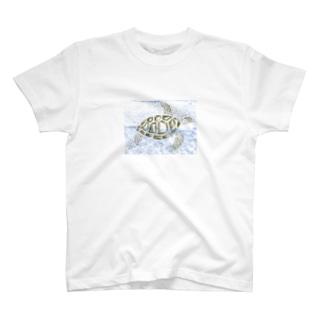 ウミガメ T-shirts