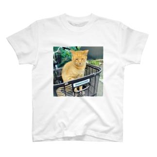 かごねこ T-shirts