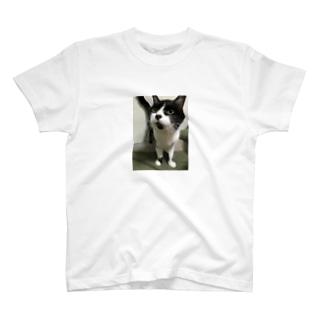 わしのねこ T-shirts