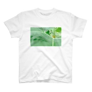 相談にのってくれそうなアマガエル君 T-shirts