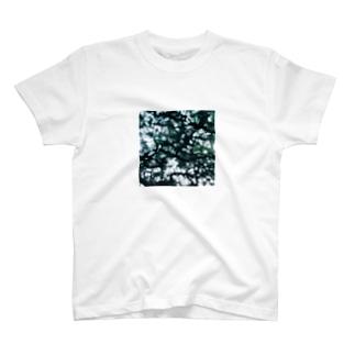 松の木のトンネル T-shirts