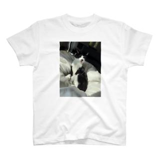 だいごろ(毛繕い) T-shirts