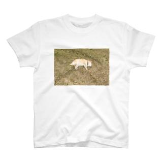 実家の犬 T-shirts